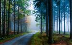 Обои Дорога в туманном осеннем лесу