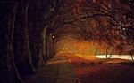 Обои Тротуар с осенними деревьями, фотограф Luis Valadares