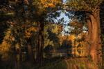 Обои Первые лучи солнца касаются деревьев, Новокузнецк, Кузбасс, фотограф Художников Павел
