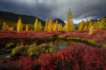 Обои Ручей Неведомый осенью, Колыма, фотограф Максим Евдокимов