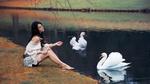 Обои Модель Аурела Скандай на берегу реки кормит лебедей