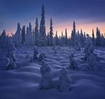 Обои Ели, покрытые снегом, фотограф Королев Сергей