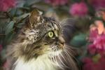Обои Кошка на фоне размытого фона с цветами. Фотограф Kasia Heinrich