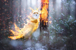 Обои Огненная лисица в лесу, by 0l-Fox-l0
