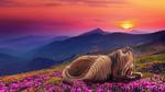 Обои Лошадь в венке из ромашек лежит на цветочной поляне в горах, by Daelynnn