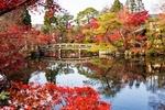 Обои Каменный мост, пруд и беседка в осеннем парке, Japan / Япония