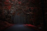 Обои Осенние деревья вдоль дороги. Фотограф Janek Sedlar