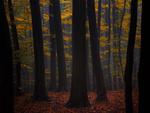 Обои Осенние деревья от фотографа Janek Sedlar