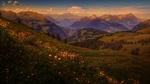 Обои Цветочный луг на фоне Швейцарских гор на закате
