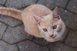 Обои Кошка сидит на асфальте и смотрит вверх. Фотограф Камилла Тольдевар Джессен