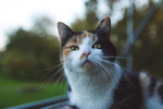 Обои Кошка смотрит на нас. Фотограф Камилла Тольдевар Джессен