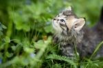 Обои Котенок стоит в траве и смотрит вверх, фотограф Iveta