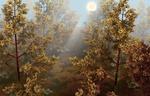 Обои Мальчик с кошкой в осеннем солнечном лесу, by marijeberting