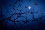 Обои Над ветками дерева пролетают летучие мыши на фоне неба с луной
