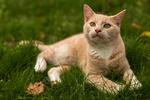 Обои Кошка на траве с осенними листьями, by Onistocke