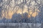 Обои Зимняя природа сквозь, покрытые инеем, ветки дерева, фотограф Анатолич