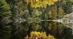 Обои Лес у озера, фотограф Etienne Ruff
