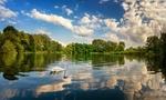 Обои Белый лебедь на пруду под голубым небом с кучевыми облаками, фотограф Christian Heller