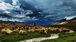 Обои Чабан пасет стадо овец у ручья