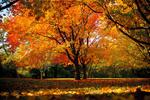 Обои Золотая осень, фотограф Nazar Zhovnirchyk
