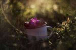 Обои Кружка с ягодами и цветочком в солнечных бликах