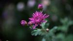 Обои Красивый цветок на размытом фоне