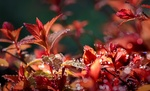 Обои Осенние листья в каплях воды