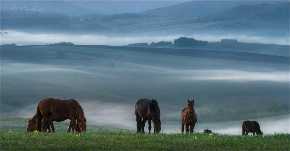 Обои для рабочего стола Лошади туманным летним утром, Алтай, фотограф Влад Соколовский