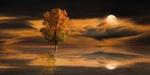 Обои Одинокое дерево на фоне облачного неба и Луны, фантасмагория, by Gerhard Gellinger