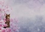 Обои Кошка среди цветов, размытый фон, by Dorothe