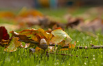 Обои Ветка дуба с желудем лежит в траве