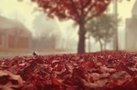 Обои Ковер из красных осенних листьев на улице города, фотограф Maelia Rouch