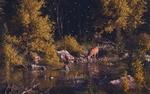 Обои Олень пьет воду в ручье, в котором плавают две утки, art by Calder Moore