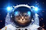 Обои Кот в скафандре космонавта