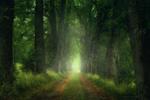 Обои Аллея в осеннем лесу, фотограф Zanfoar
