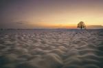 Обои Одинокое дерево в заснеженном поле, фотограф Zanfoar
