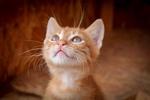 Обои Мордочка любопытного котенка на размытом фоне, by Birgit