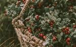 Обои Корзина с красными ягодами