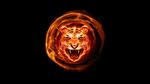 Обои В центре пламени находится голова огненного тигра