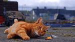 Обои Рыжий кот играет с опавшими осенними листьями