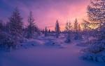 Обои Зима в Горганах, Карпаты, Украина