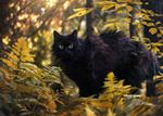 Обои Черная кошка в осеннем лесу, by Thunderi