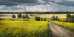 Обои Зауралье летом, фотограф Бусыгин Борис