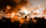 Обои Две бабочки на нераспустившемся бутоне одуванчика