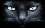Обои Мордочка черного кота крупным планом, by welshdragon