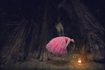 Обои Девушка в розовом платье висит в воздухе посреди темного леса, by Malika Drobot