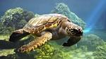 Обои Вода природа животные черепахи коралловый риф море