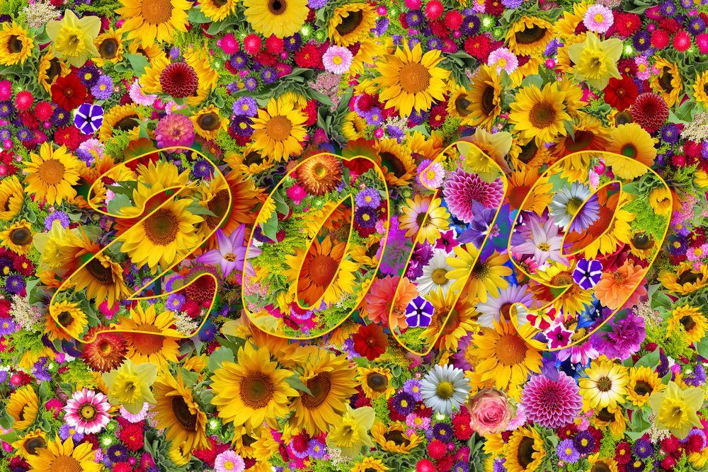 Обои для рабочего стола Цифры 2019 на фоне ковра из цветов