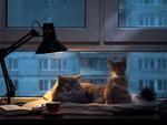 Обои Кошка с котенком на окне, за которым идет дождь