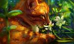 Обои Рыжий кот нюхает белые цветы, by Meorow